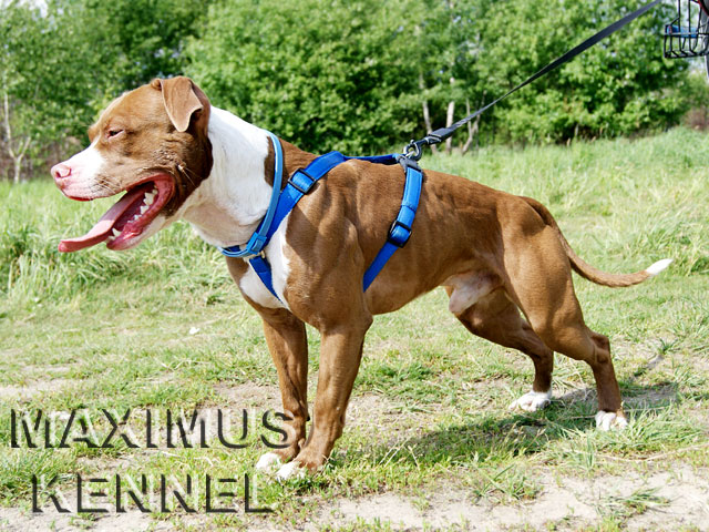 Maximus Kennel - E-pies